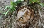 Кто я по дереву. Гороскоп друидов: какое дерево связано с тобой? Мой зеленый гороскоп