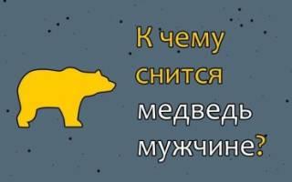 Медведь приснился к чему мужчине снится. К чему снится медведь? В каком настроении был медведь во сне