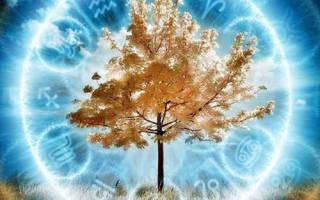 Дерево по году рождения и знаку зодиака. Древесный гороскоп друидов: характер по дню рождения, совместимость знаков