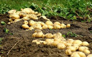 Сонник угощать картошкой. Что означает сон Картошка