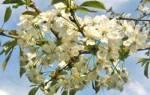 Лунный календарь растений май года
