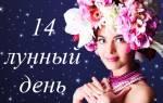 14 лунный день tasya me. Бизнес — четырнадцатый лунный день