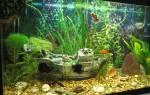 Где лучше установить аквариум. Аквариум по фен-шуй в квартире: опасный «талисман»
