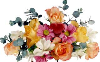 Лунный календарь для посадки семян цветов