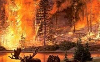 К чему снится пожар лес горел. Сонник: к чему снится пожар