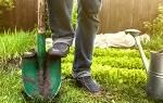 К чему снится копание земли лопатой. Сонник: к чему снится копать