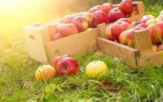 Праздник медовый спас. Обряды Яблочного спаса на любовь, красоту и финансовое благополучие