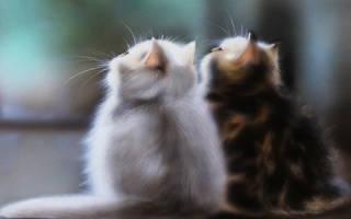 Сон кошка родила котят к чему. К чему снится что кошка родила котят