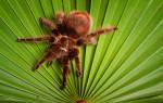 К чему снится по соннику большой паук. Паук к чему снятся летом? Кому приснился паук