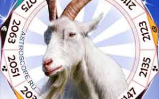 Что ждет коз в году. Год обезьяны для козы
