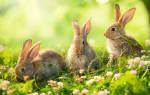 Что значит когда снится кролик. К чему снятся кролики женщине? Толкование сна по виду кролика