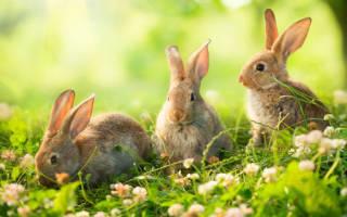 Что значат во сне кролики. К чему снятся кролики? Трактовка сна Кролик