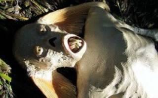 Факты о русалках существуют ли они. Существуют ли русалки на самом деле или это выдумки моряков и хороший фотошоп? Видео: Русалки: мифы или правда