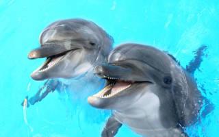 К чему снятся дельфины в океане. К чему снится дельфин по соннику