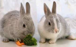 Толкование сна про кроликов: к чему они снятся. Кусает кролик