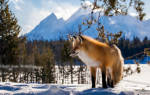 К чему во сне увидеть лису. Рыжая лиса во сне — что значит подобное сновидение? Снится черная лиса