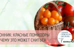 Видеть во сне помидоры красные на кустах. К чему снятся красные помидоры: в салате, на ветках, в неожиданных местах? Основные толкования, к чему снятся красные помидоры