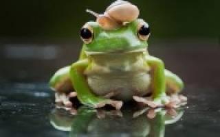 К чему в дом приходит лягушка. Жаба в доме — приметы
