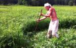К чему снится косить траву косой. К чему снится косить траву? Сонник косить траву косой во сне