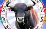 Что ожидает быка в году. Год петуха для быка
