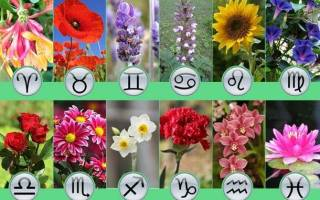 Гороскоп по цветам и растениям. Выбираем цветы по знакам зодиака