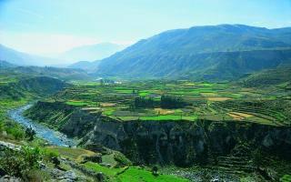 Перу природа и животные. Высший законодательный орган. Растительный и животный мир