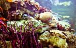 К чему снится собирать водоросли. Увиденный сон — Водоросли
