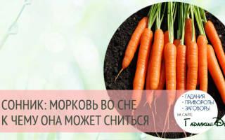 Приснилась морковка к чему. Полный сонник Новой Эры