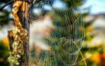 К чему снится паутина на дереве. «Сонник Паутина приснилась, к чему снится во сне Паутина
