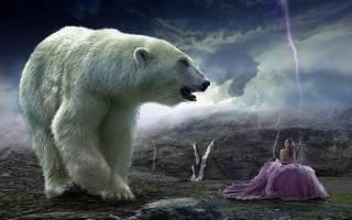 К чему снится медведь парню. К чему девушке или женщине снятся сны с медведями