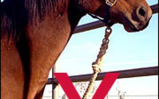 Привязать коня значение. Привязать себя к прошлому или Создавать свое будущее