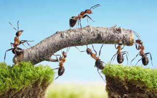 Народные поверья и современные сонники расскажут, к чему снятся муравьи. Толкование сновидения: к чему снятся муравьи