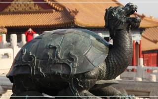 Черепаха с головой дракона значение. Красноухая черепаха