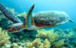 К чему снится черепаха в руках. Черепаха в воде толкование сонника
