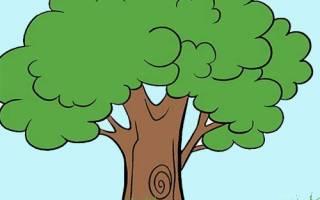 Гадание дерево судьбы. Гадание на желание – просто и правдиво