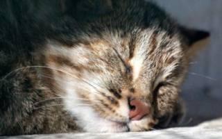 Приснилось умершее домашнее животное кошка. К чему снится умершая кошка: толкование по сонникам