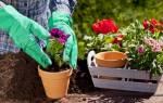 К чему снится пересаживать растения в землю. Сажать цветы по соннику