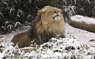 Финансовый гороскоп на февраль лев.