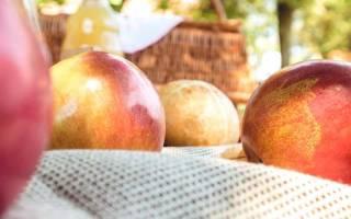 Яблочный спас шмелев краткое. «Лето господне» (Шмелев): описание и анализ повести