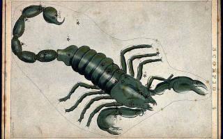 Кто надо скорпиону по знаку зодиаку. Какой знак зодиака может противостоять скорпиону