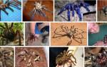 К чему снится большой паук мужчине. К чему снится большой черный паук женщине