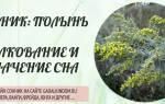 К чему снится полынь трава для женщин. Сонник Дмитрия и Надежды Зимы