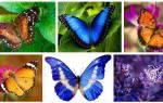 Бабочка садится на руку во сне. К чему снится бабочка: сонник про бабочку