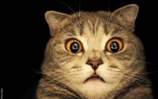 К чему снится разговор с котом. Кошка говорит человеческим голосом