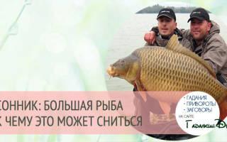 Сонник приснилась большая рыба. Быть радости или беде? К чему большая рыба снится? Большая рыба во сне по соннику Миллера