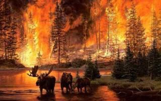 Приснилось тушить горящие вещи в доме. К чему снится тушить огонь водой