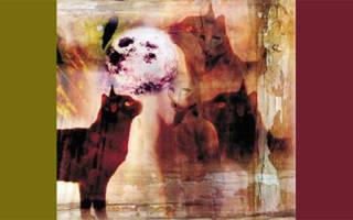 Кошка нападает толкование сонника. Сексуальность – психоанализ Фрейда