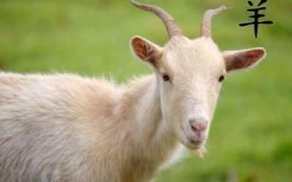 Прогноз на год для козы. Гороскоп мужчины рыба
