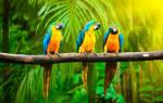Поймать двух попугаев во сне. К чему снится попугай женщине: основные значения