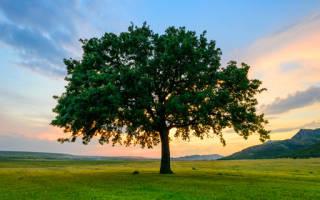 К чему снится засохшее дерево. Дерево во сне что значит